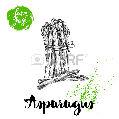 450x450 Hand Drawn Sketch Style Single Asparagus Sprout. Eco Food Vector