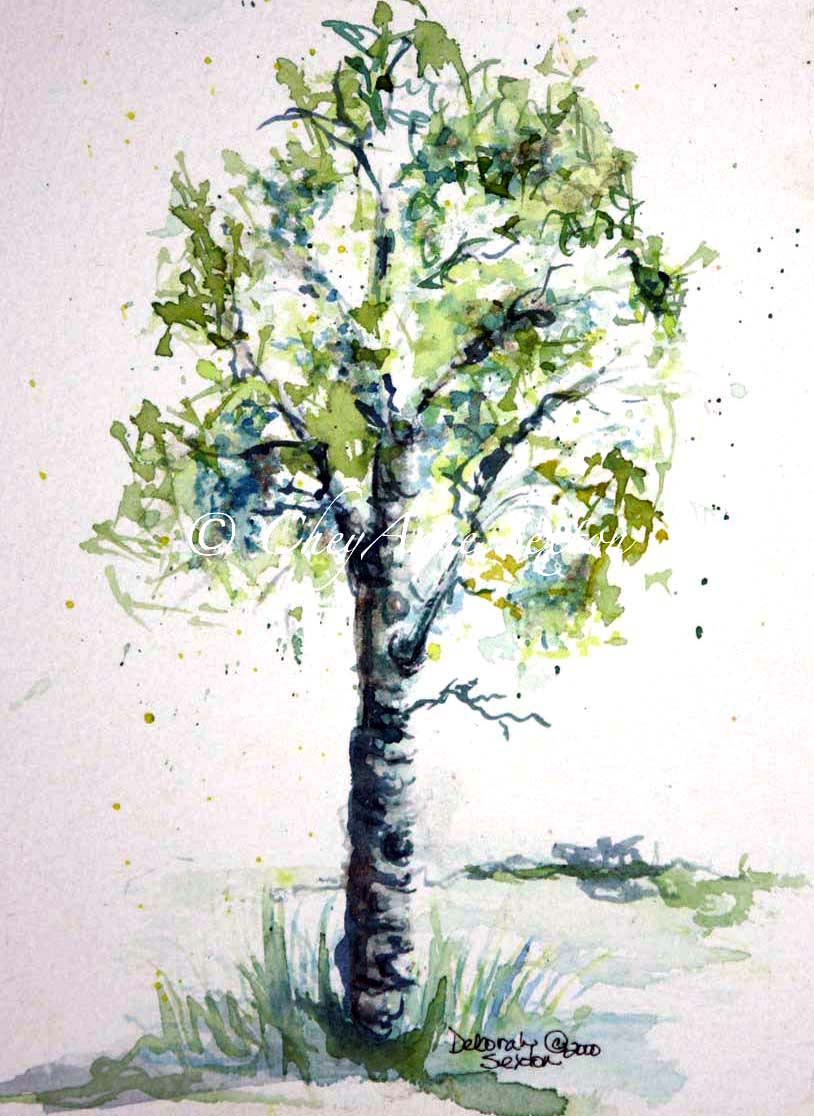 Aspen Tree Drawing at GetDrawings.com | Free for personal use Aspen ... for Tree Drawing With Watercolor  303mzq