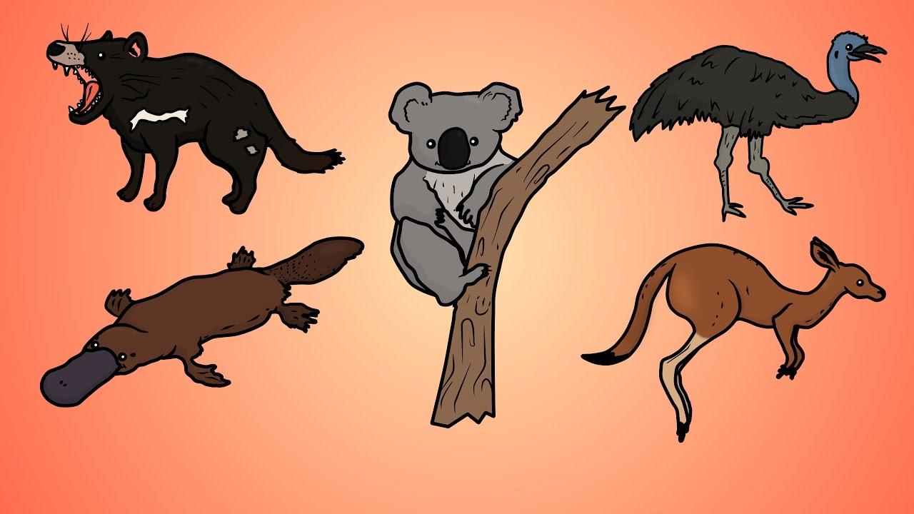 1280x720 Draw Five How To Draw Australian Animals