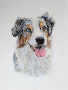 236x314 Pencil Drawing I Did Of A Beautiful Australian Shepherd! Aussies