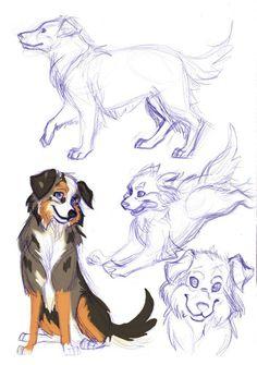 236x335 Australian Shepherd Drawing