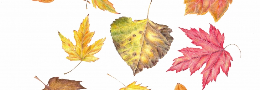830x290 Drawing Autumn Leaves Point Reyes National Seashore Association