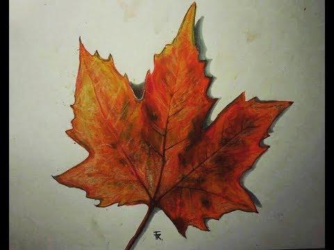 480x360 Drawing An Autumn Leaf