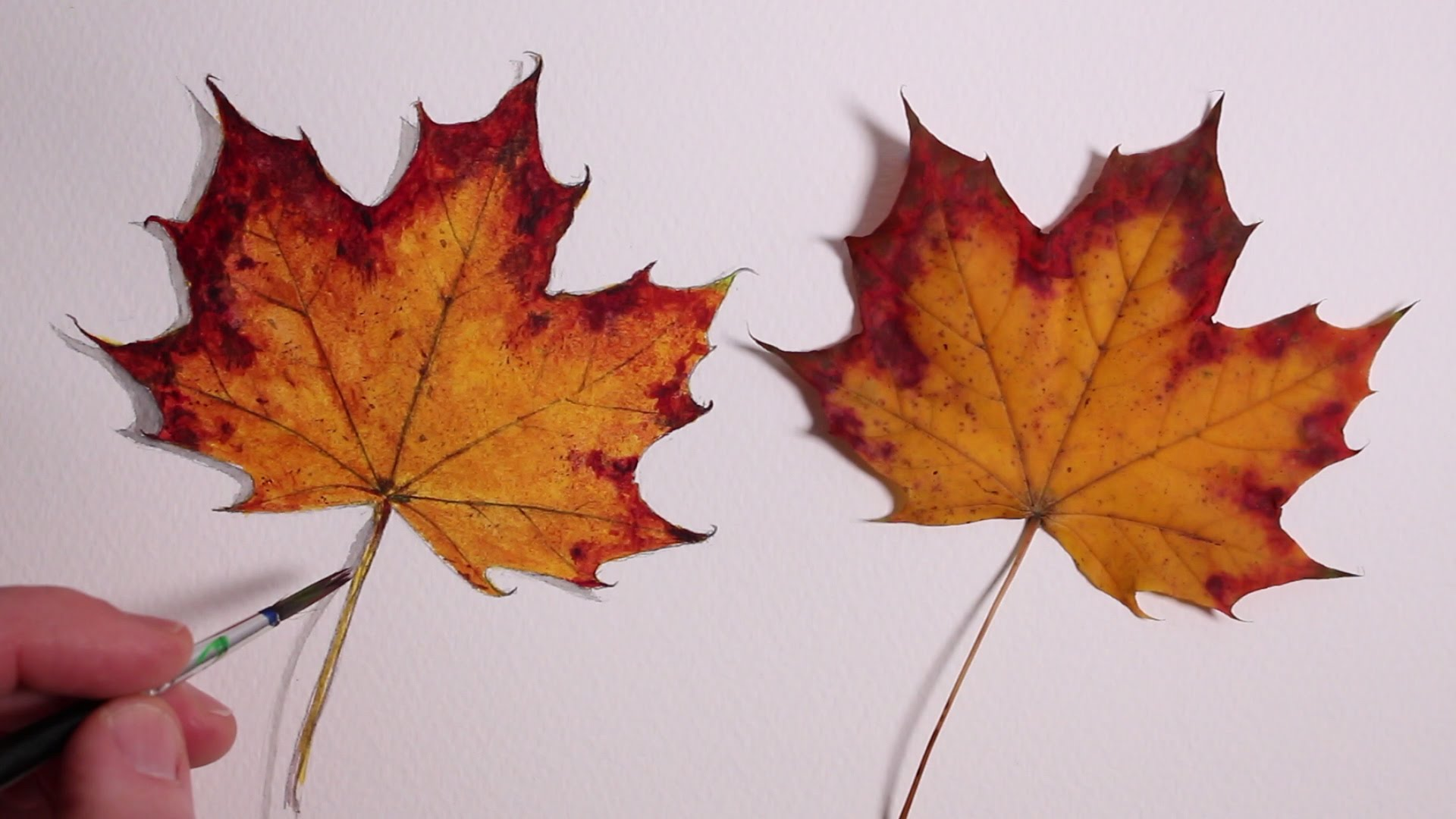 1920x1080 How To Draw A Autumn Leaf Realism Challenge