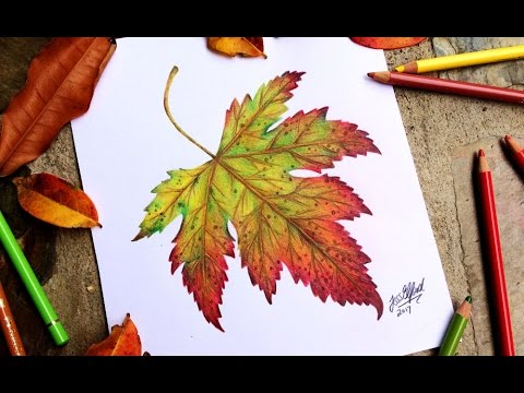 480x360 Speed Drawing Realistic Autumn Leaf