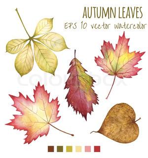 300x320 Botanical Leaf Drawings