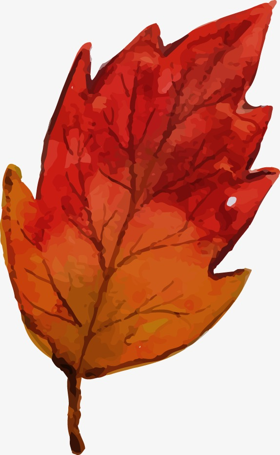 574x930 Drawing Vector Autumn Leaves, Watercolor, Vector, Autumn Png