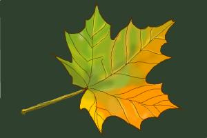 300x200 How To Draw Autumn Leaves