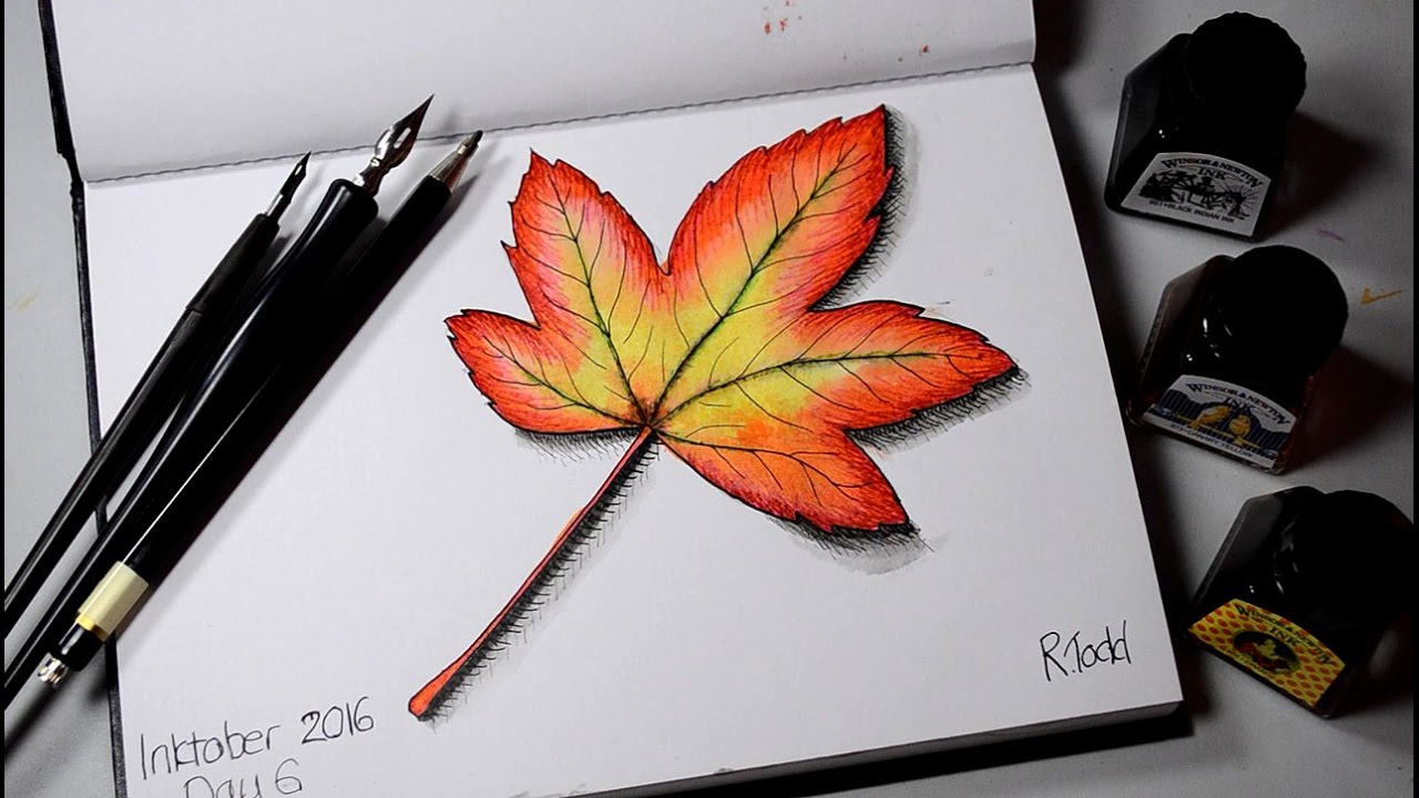 1280x720 Inktober 2016 Day 6 Maple Leaf Drawing Autumn Leaves Inking