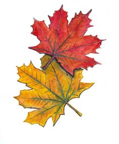 236x287 Pin By Rebecca Meinzer On Tatoo Ideas For Me Leaf