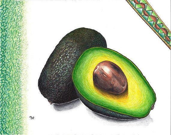 570x448 Avocado Ballpoint Pen Drawing
