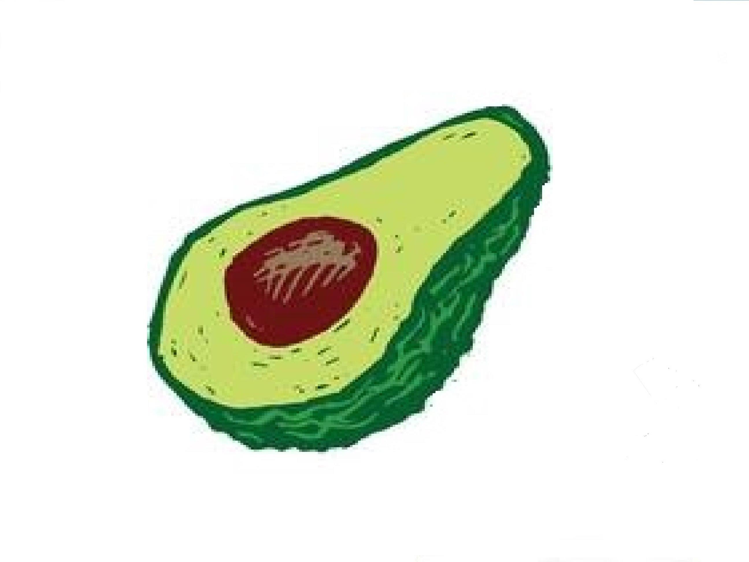 2592x1944 How To Draw An Avocado