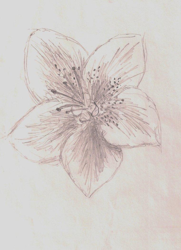 761x1050 Azalea Flower By Jinxyoung