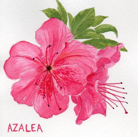 483x480 Colours In The Breizh More Flowering Shrubs