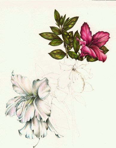 389x493 Flowers Page 2