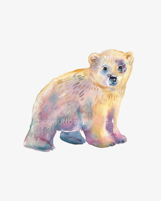 564x705 Polar Bear, Drawing Polar Bear, Bear, Baby Bear Png Image