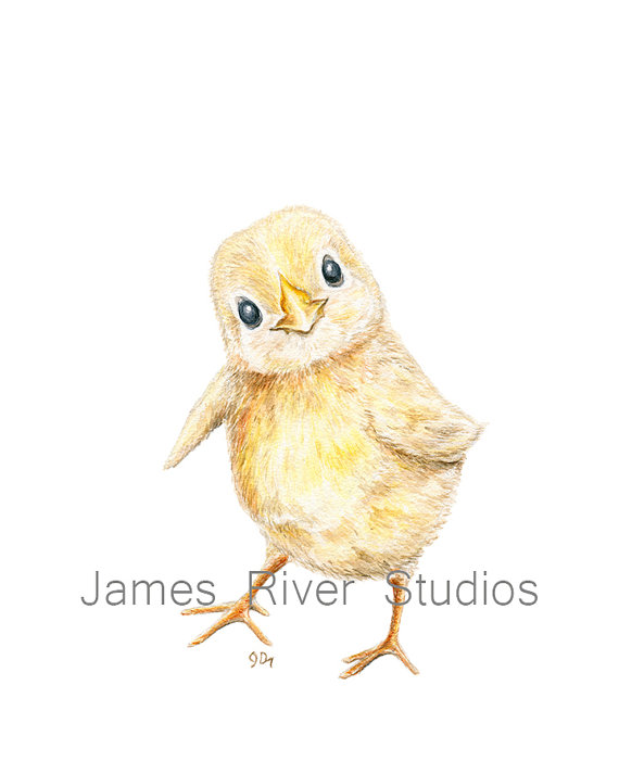 baby chicken drawing at getdrawings com free for personal use baby