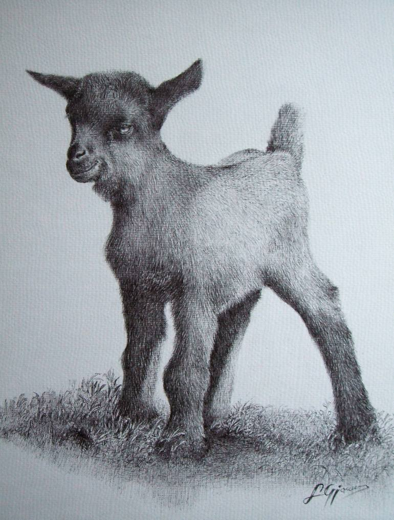 770x1018 Saatchi Art Baby Goat Drawing By Liman Gjakova