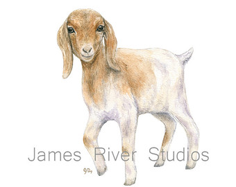 340x270 Watercolor Baby Goat Baby Goat Print Baby Goat Art Farm