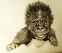 236x203 Baby Gorilla Drawings Baby Gorillas And Draw