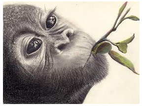 288x215 Detailed Pencil Drawings Of Animals And People By Doreen Cross