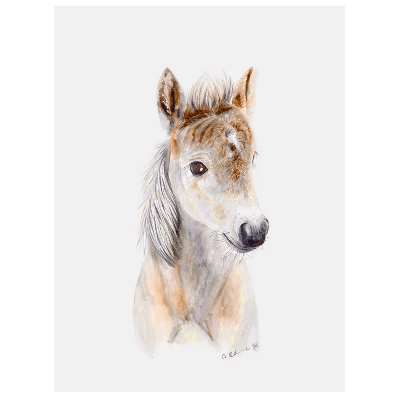792x792 Baby Horse Art Canvas Little Crown Interiors