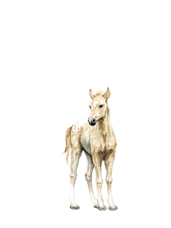 570x759 Horse No 1 Art Print Baby Animal Painting Colt Painting
