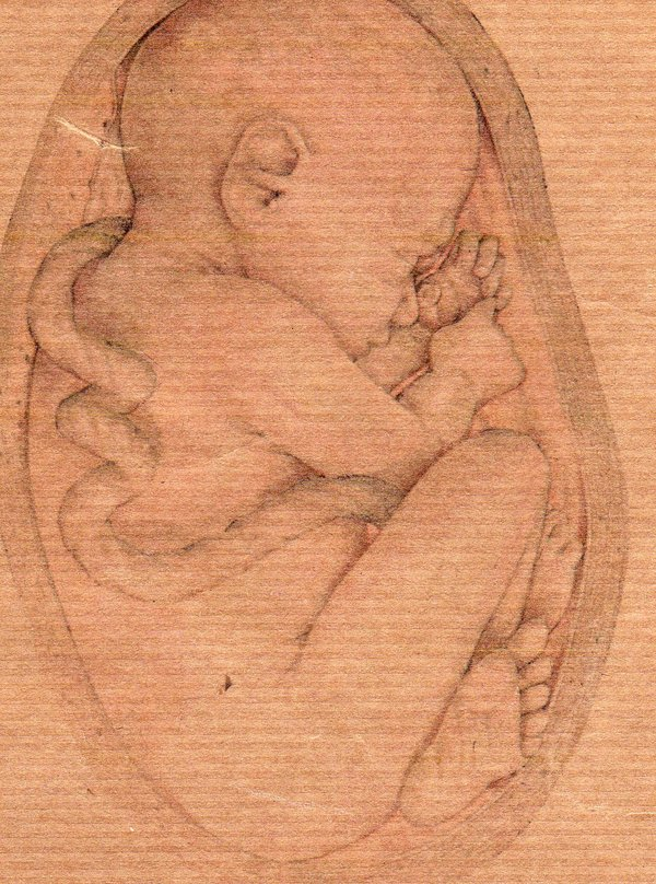 600x808 Baby In Womb Drawing