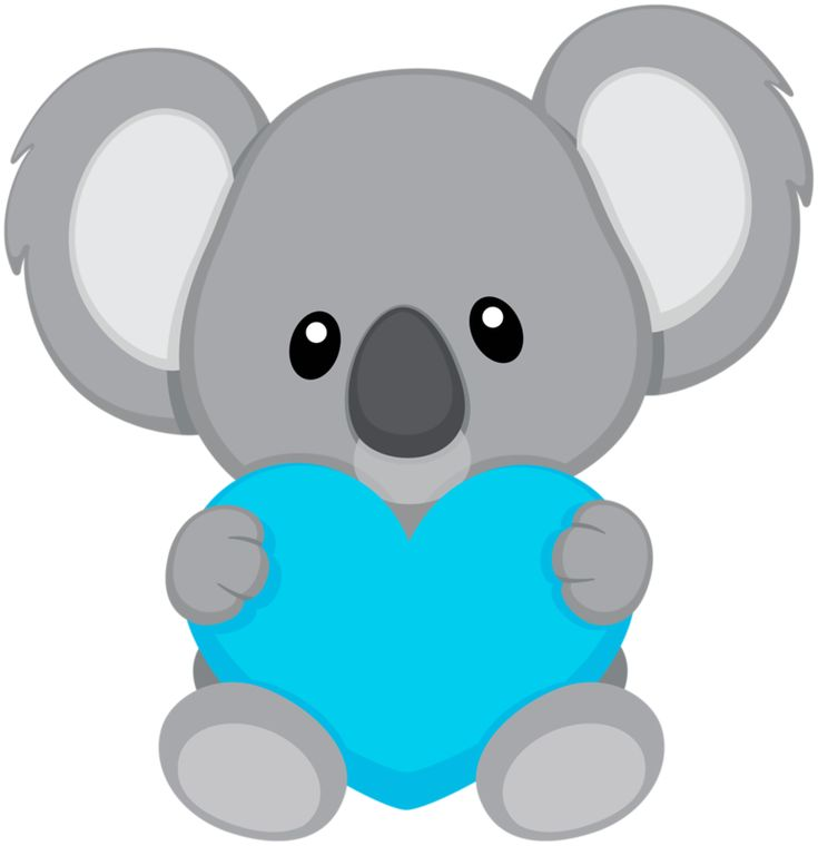 735x760 18 Best Koalas Images On Koala Bears, Koalas