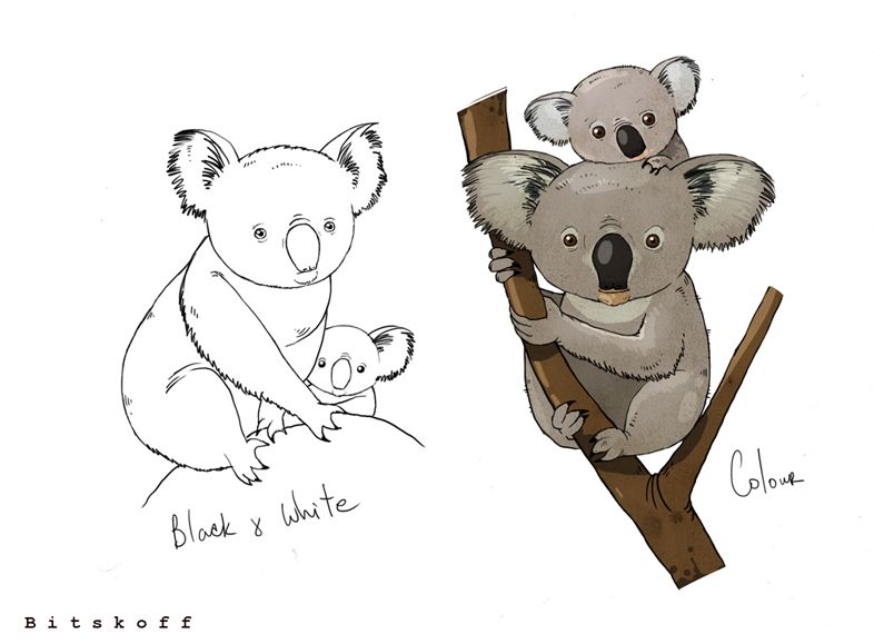 786x579 Aleksei Bitskoff. Visual Art Illustrations. Baby Koala