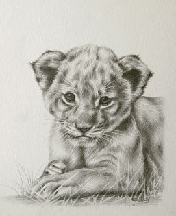 257x315 Baby Animal Drawings In Pencil