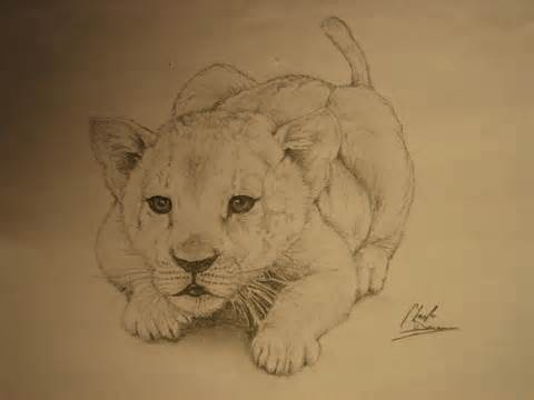 480x360 Baby Lion Drawings