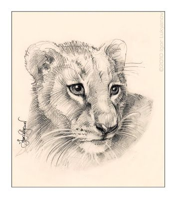 353x400 Cute Lion Cub Drawing (Baby Lion's Face Pic) Art