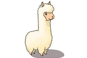 300x200 How To Draw A Llama For Kids