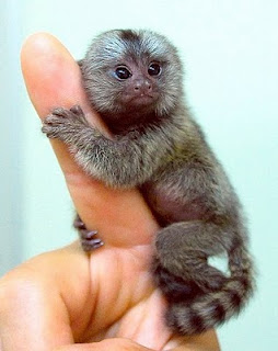 254x320 Pictures Of Cute Baby Monkeys, Cute Baby Monkey, Cute Monkey