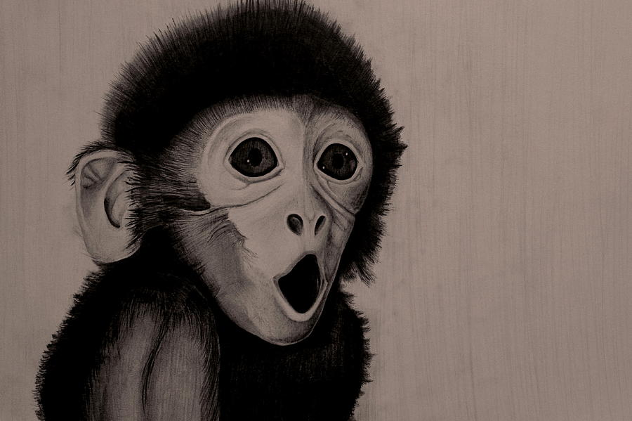 900x599 Surprised Baby Monkey Drawing By Skincandy Nine