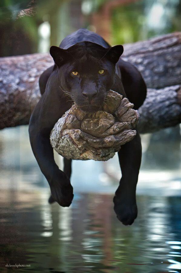 598x900 Stunning Wildlife On Animal, Wildlife And Twitter