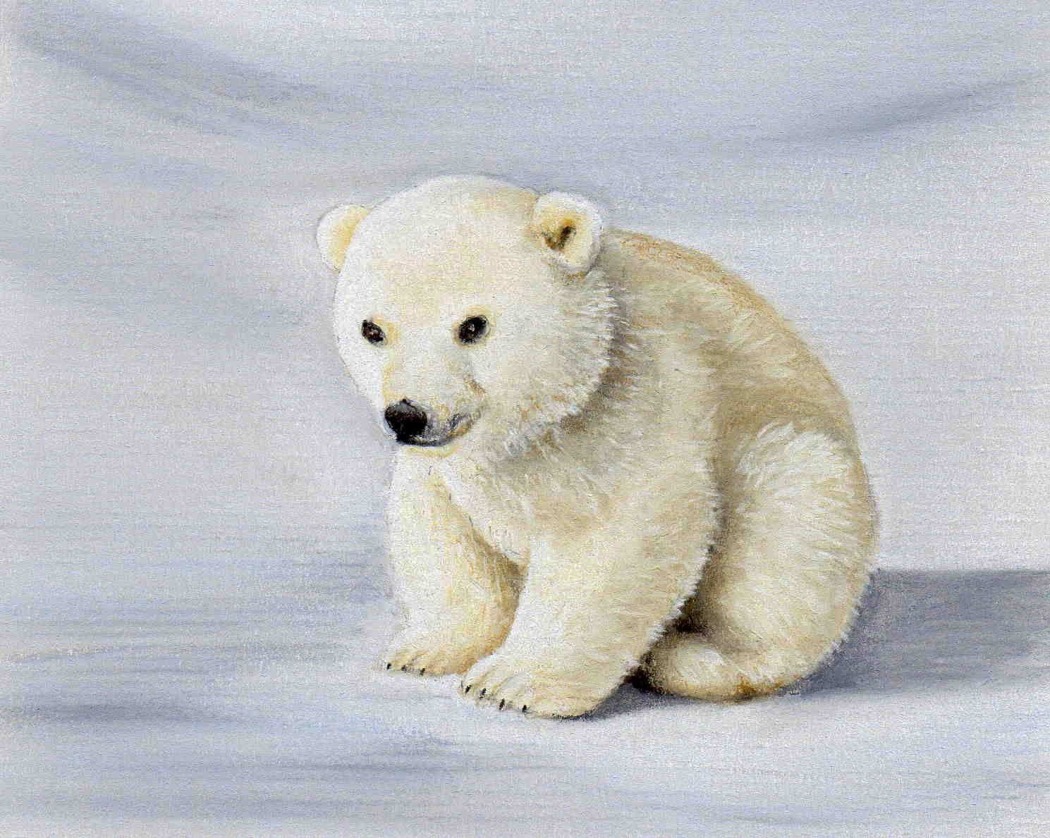 1489x1189 Baby Polar Bear001.jpg Pixels C. Bradley Pastel