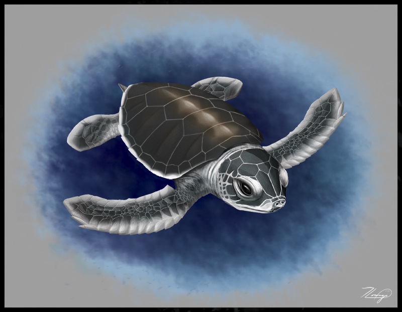 800x622 Baby Green Sea Turtle By Novastar2486