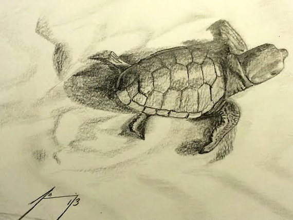 570x428 Baby Sea Turtle Crawling To Ocean Original Framed Drawing