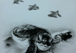 300x210 Baby Sea Turtle Drawing
