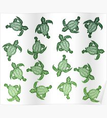 210x230 Baby Sea Turtles Drawing Posters Redbubble
