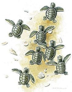 236x301 Best Sea Turtle Tattoo Design Idea 2016. Description