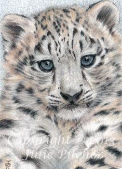 1024x614 Snow Leopard Family By NatsumeWolf On DeviantArt 253x350 ACEO