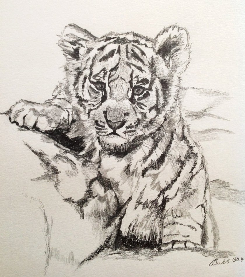 840x951 Baby Tiger By Carlyscanvas