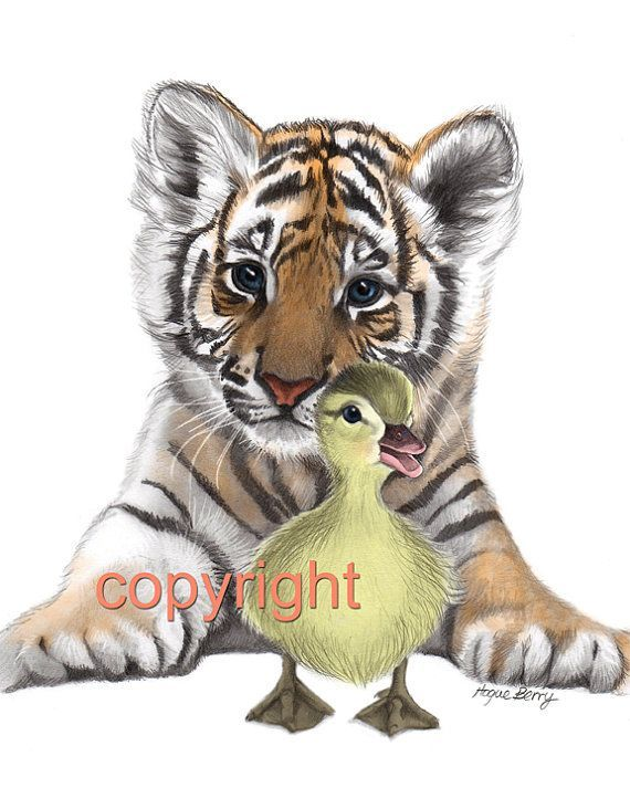 570x713 Drawings Of Tigers Tiger Cub, Duckling, Pencil Drawing, Colored