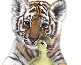 340x270 Pix For Gt Pencil Drawings Of Baby Tigers Art I Find Attractive