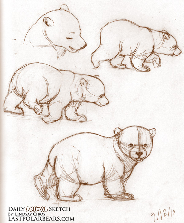600x730 Bear Sketches