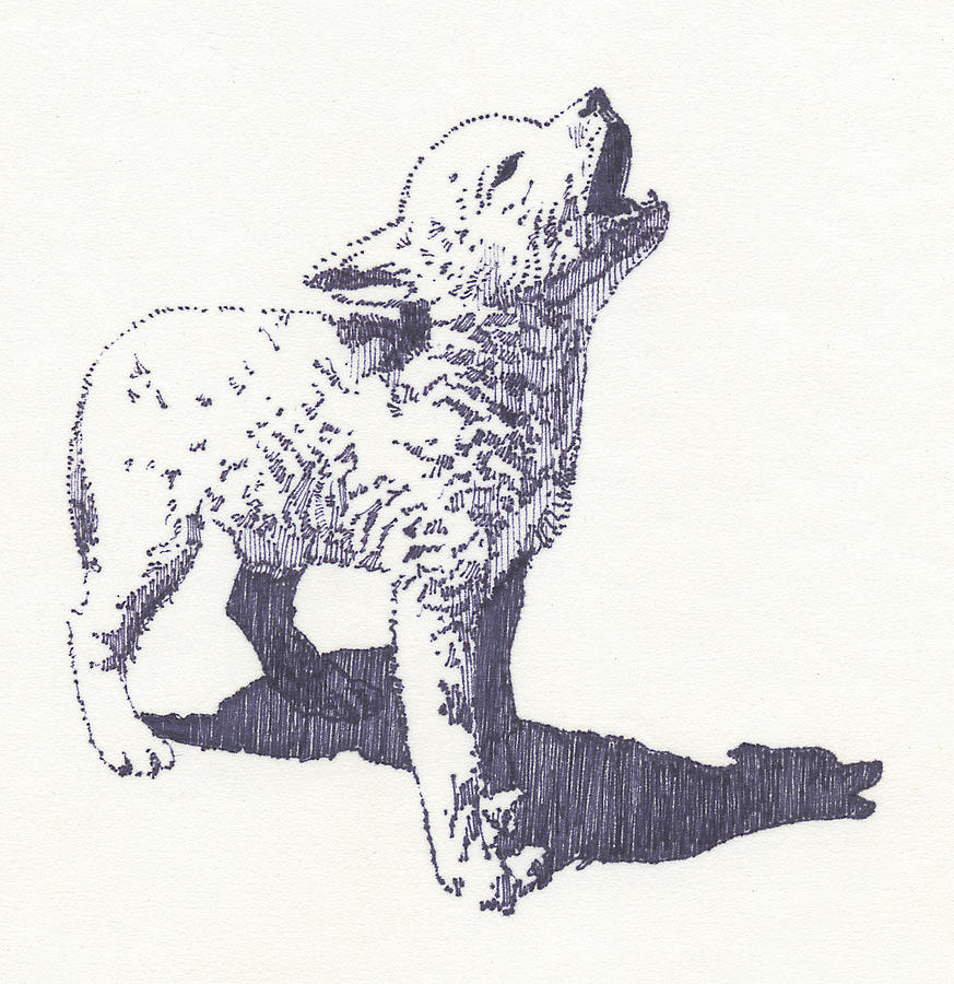 873x900 Baby Wolf Drawing By John D Benson