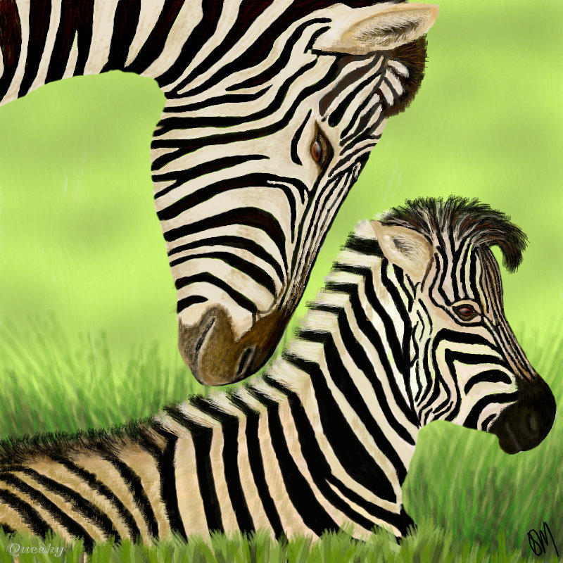 800x800 Baby Zebra Baby Zebra An Animals Drawing By Trumoon In Group